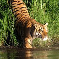 Sundarban Tiger Camp Tour