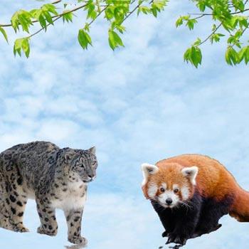 Wildlife Sikkim
