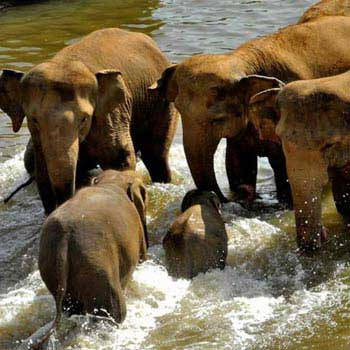 Refreshing Srilanka Tour