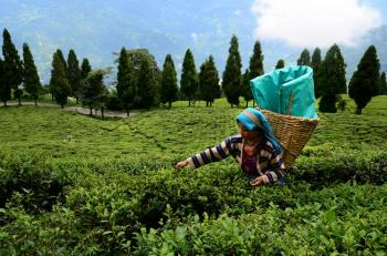 Exclusive Assam with Meghalaya Package