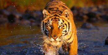 Sundarban Safary Tour