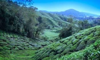 Luxurious Getaway to Darjeeling Tour
