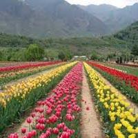 Summer Paradise - Srinagar - Gulmarg - Pahalgam - Patnitop Tour