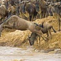 Masai Mara Tour