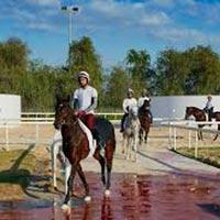 Horse Stable Visit Tour