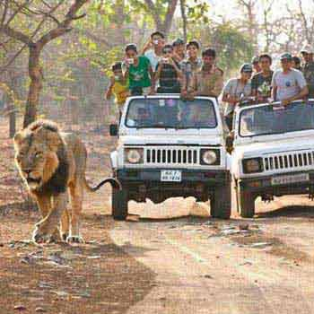 Gir Forest and Somnath Tour