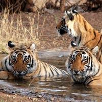 Wild Rajasthan Tour