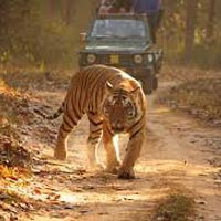 In Search of Tiger Tour