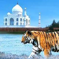 Taj and Tiger Tour
