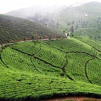 Extended Darjeeling Lachung Gangtok Tour