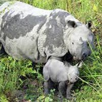 Kaziranga Weekend Package