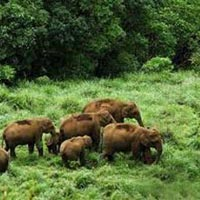 Munnar - Thekkady - Cochin 4 Days / 3 Nights Tour