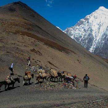 Laya Gasa Trekking Tour