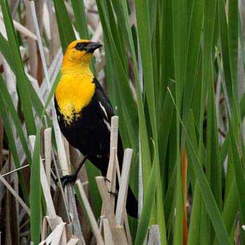 Bird Watching in Bhutan Tour