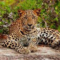 Wild Sri Lanka Tour