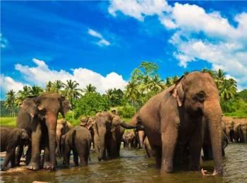Wildlife Paradise Tour