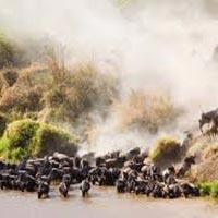 Kenyan Game Parks Lodge Safari Tour