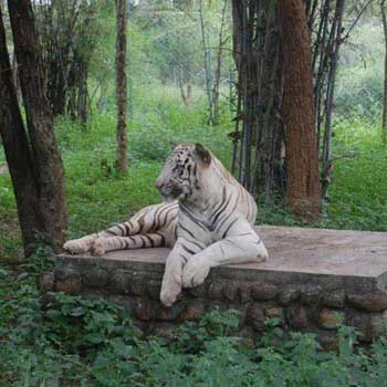Namdapha National Park Tour Package