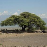 Ngorongoro Crater Highlands Trekking Tour