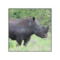 4 Days Masai Mara - Lake Nakuru Safari Tour