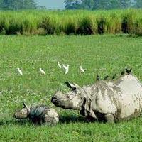 Birding In Assam and Meghalaya Tour