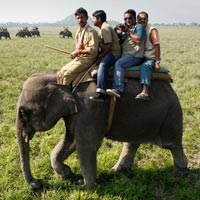 Wild safari Assam Tour