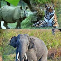 Kaziranga 3Days Tour