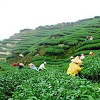 Shillong 03 Nights / 04 Days Tour