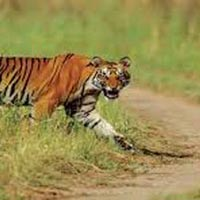 Chandigarh Corbett Weekend Tour