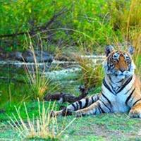 Jaipur- Ranthambhore Tour