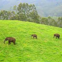 Kerala with Munnar Tour