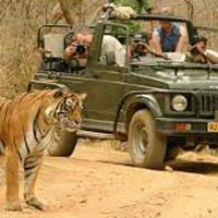 Royal Rajasthan Tour with Tiger Safari