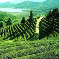 Extended Darjeeling Gangtok with Lachung Tour