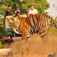 Mesmeric Madhya Pradesh Tour