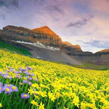 Valley of Flowers Trek Tour