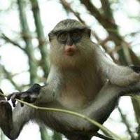 Tafi Atome monkey sanctuary Tour