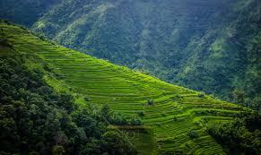 Nagaland Tour 8 Days Tour