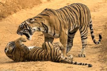 Khajuraho Temple with Tiger Safari in India Tour