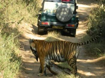 Temple & Tiger Safari - Madhya Pradesh Tour