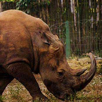 10 Days Rwanda,Kenya and Tanzania Safari Package