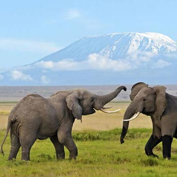 12 Days Kenya and Tanzania Safari Package