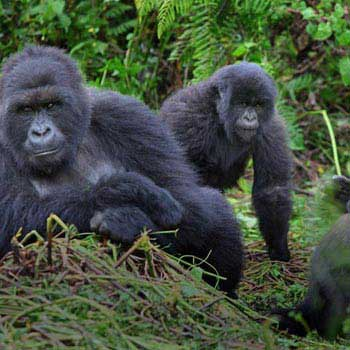 Uganda Gorilla and Game Safari Package