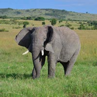 6 Days Kenya and Tanzania Safari Tour