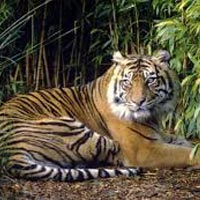 The Tiger's Heaven Tour