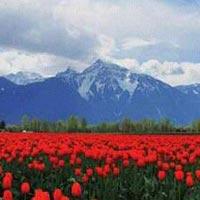 Amazing Kashmir 7N/8D Tour