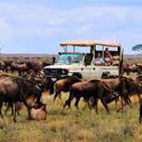 Tanzania Northern Safari 7 Days /6 Nights