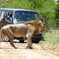 3- Night Kruger Park Package North