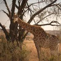 Clifftop Exclusive Safari Hideaway - Welgevonden Private Game Reserve Tour