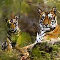 Kanha Nagpur Tour Package