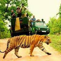 Tiger Capital Tour
